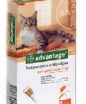 advantage-gatos_foto